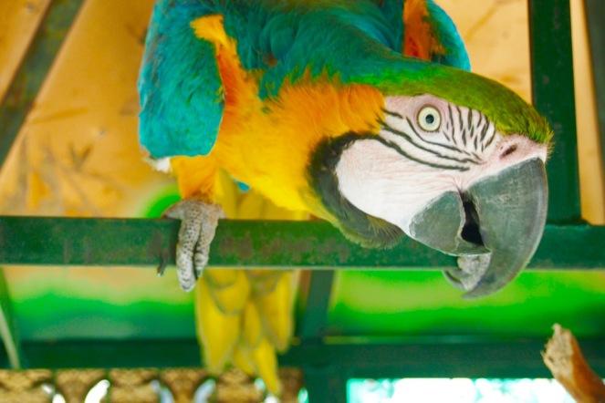 Папагалът