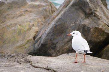 Властелинът на плажа