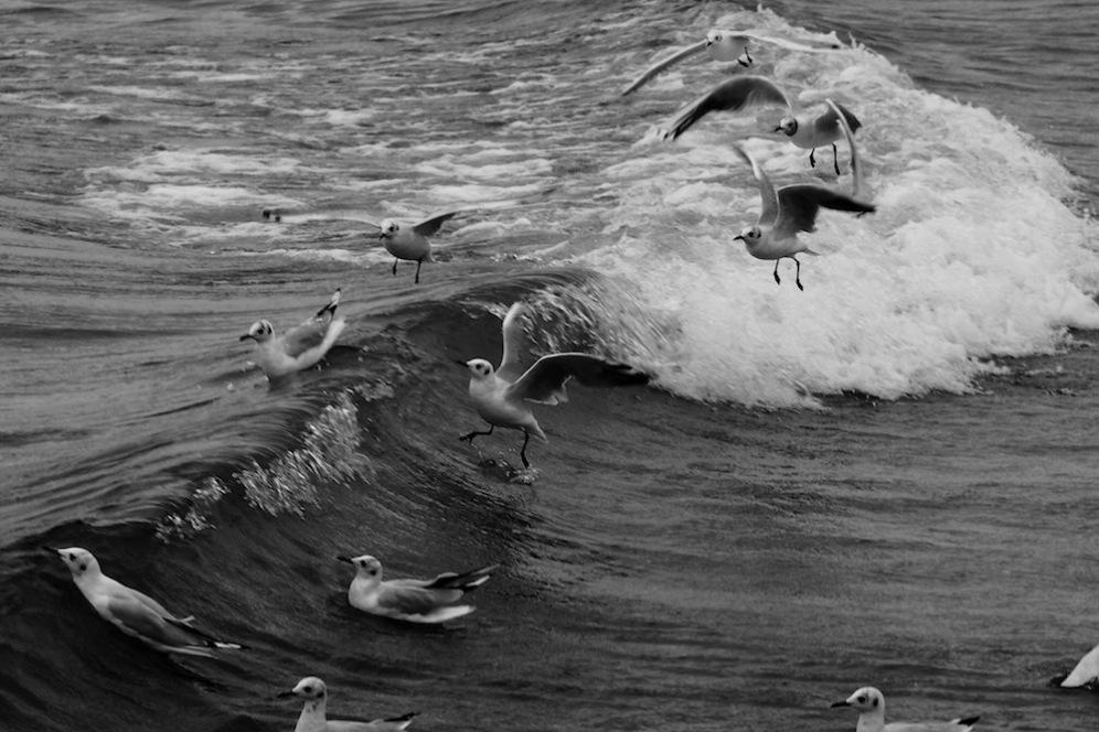 На гребена на вълната
