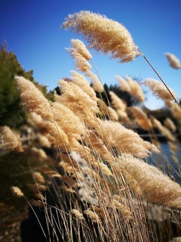 Полъхът на вятъра