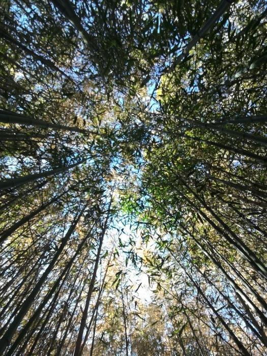 Бамбуковата гора