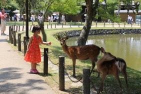 Сърните в парка Нара
