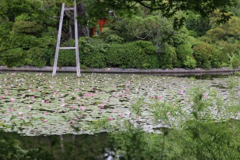 Езерото в храма Рьоан-джи