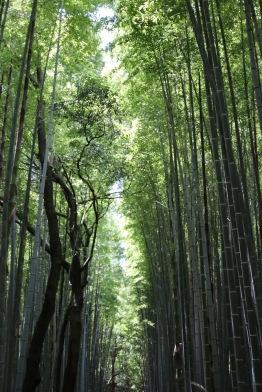 Бамбуковата гора Сагано в Арашияма, Киото
