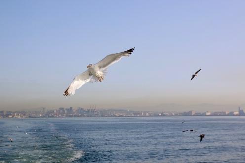 Полет над неаполитанския залив