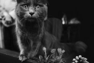 Котката Грейси