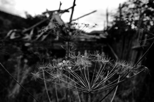 В градината на миналото