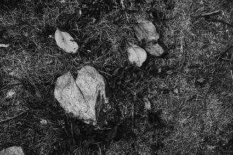 Още едно каменно сърце