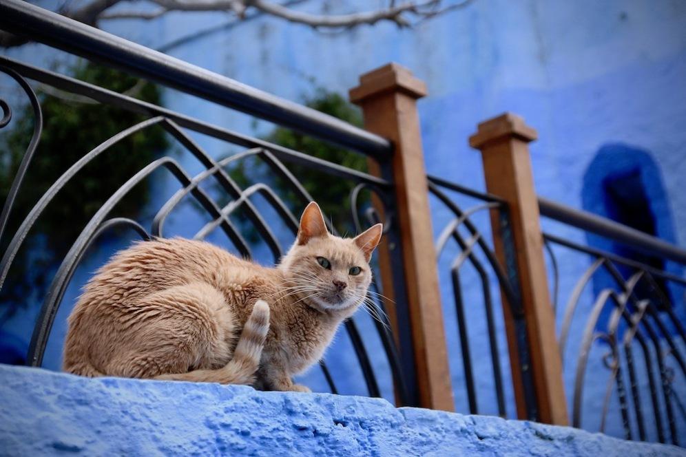 Котките са много, но не са сини.