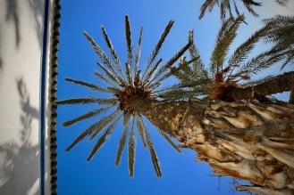 Под сянката на палмите.