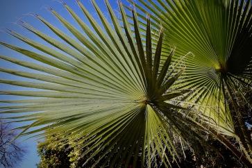 Палми в градината на двореца Бахия.