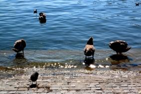 На брега на езерото Цюрих.
