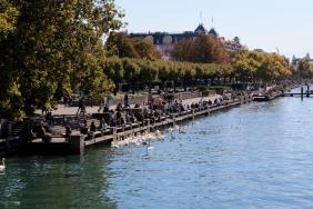 Лебедите на брега на Цюрихското езеро.
