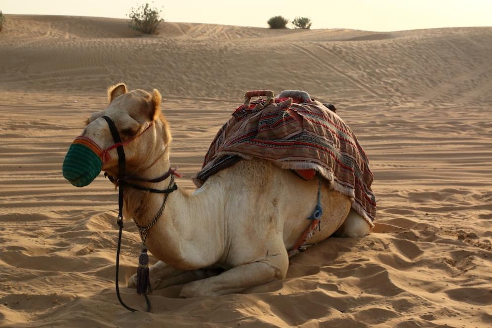 Топ моделът на пустинята
