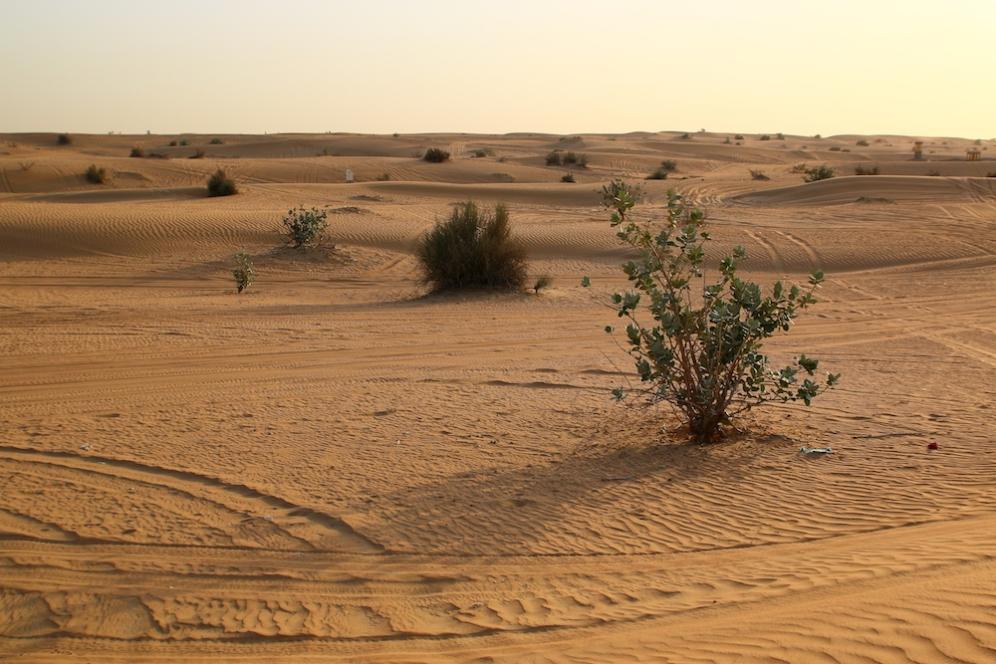 Магията на пустинята