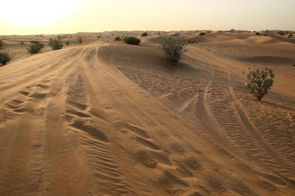 Дюни и малки храсти в морето от пясък