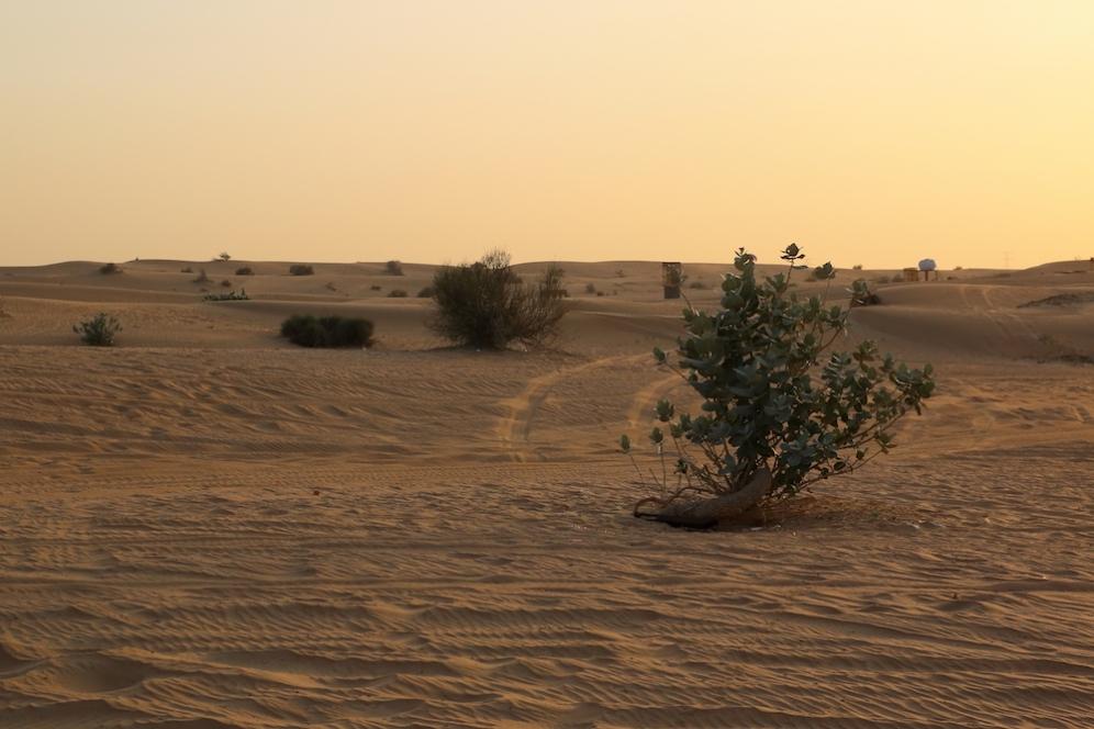 Фин пясък, нежен залез и малко зеленина