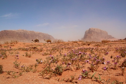 В пустинята има и малки цветя.