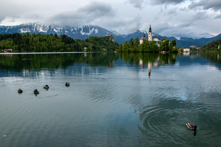 Патиците в езерото