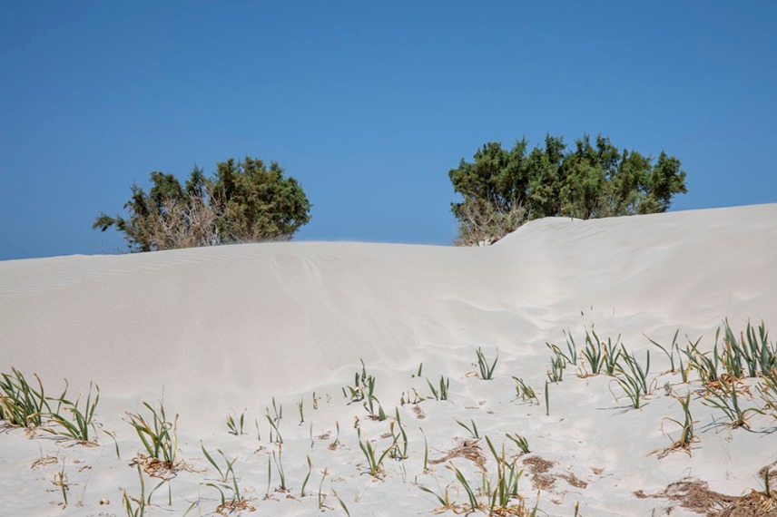 Ослепително бял пясък и растения в защитената зона на остров Елафониси.