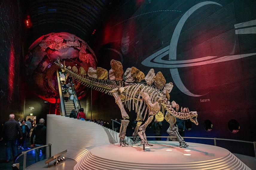 Скелет на динозавър в Природо-научния музей, Лондон.