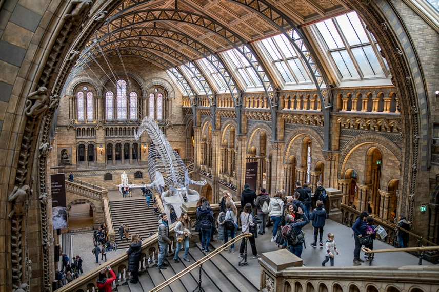 Зала Hintze на Природо-научния музей, Лондон.