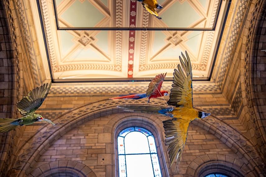 Препарираните папагали в Зала Hintze на Природо-научния музей, Лондон.